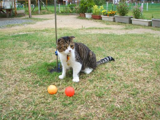 パークゴルフ場の猫