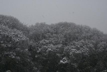 2008年2月2日 028