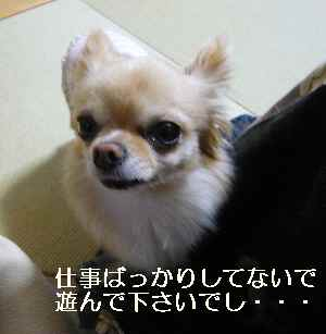 blog2012022304.jpg