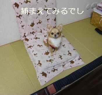 blog2012022403.jpg