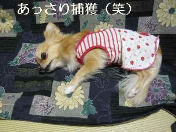 blog2012022404.jpg