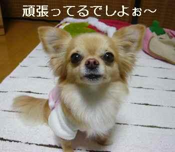 blog2012022903.jpg
