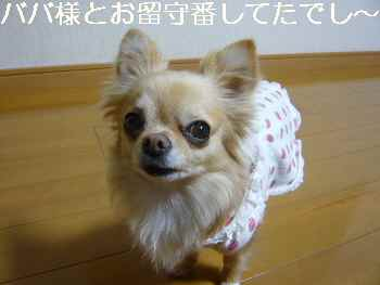 blog2012040601.jpg