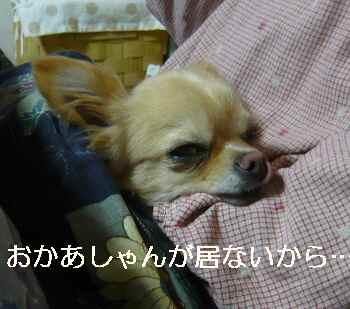 blog2012040901.jpg