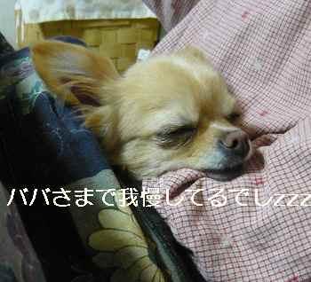 blog2012040902.jpg