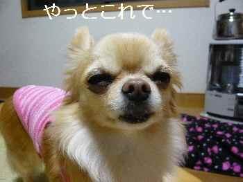 blog2012041001.jpg
