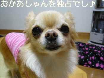 blog2012041002.jpg