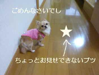 blog2012041103.jpg