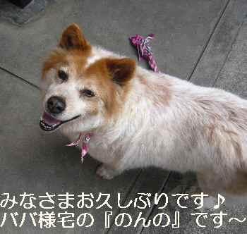 blog2012041302.jpg