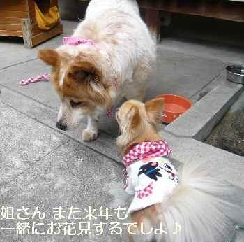 blog2012041308.jpg
