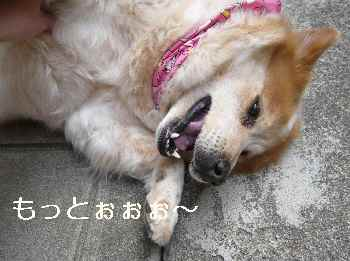 blog2012041311.jpg
