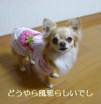 blog2012041503.jpg
