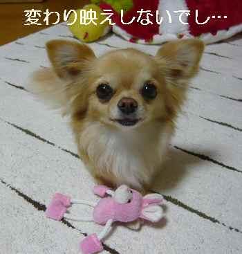 blog2012041706.jpg
