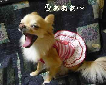 blog2012041901.jpg