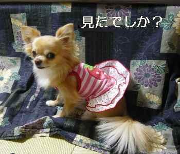 blog2012041902.jpg