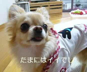 blog2012042201.jpg