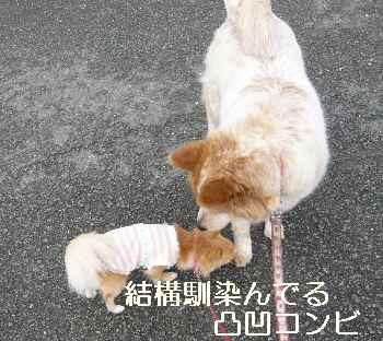 blog2012042302.jpg