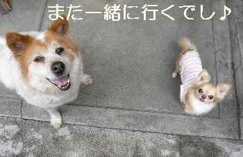blog2012042303.jpg