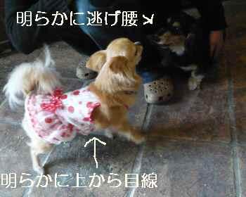 blog2012042305.jpg