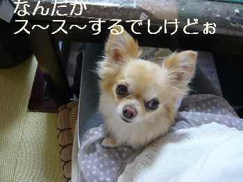 blog2012042401.jpg