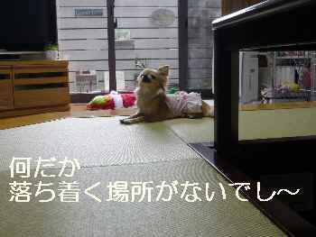 blog2012042504.jpg