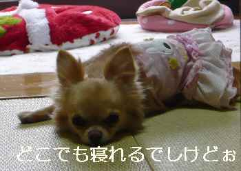 blog2012042505.jpg