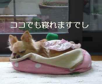 blog2012042506.jpg