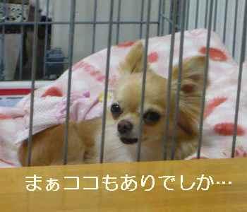 blog2012042507.jpg