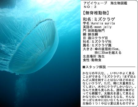 生物図鑑その3 ミズクラゲ!