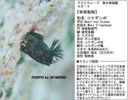 生物図鑑その4 コケギンポ!
