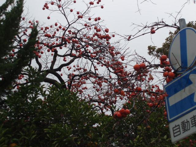 010-01-11柿の家