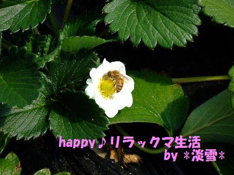 2009_0311200807180005.jpg