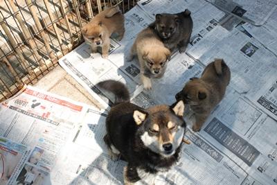 dog_yayoi_1.jpg