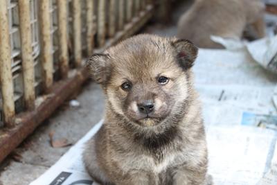 dog_yayoi_2.jpg
