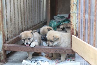 dog_yayoi_3.jpg