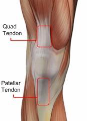 knee-tendons-anterior.jpg