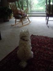 sheila sits