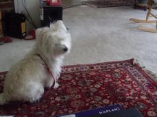 sheila sits2