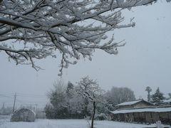 雪景色 畑
