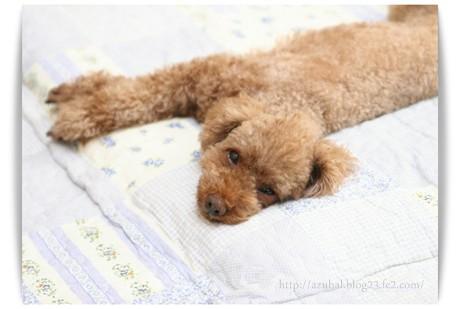 趣味は寝ること