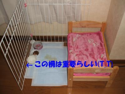 090606_convert_20080907020556.jpg