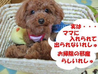 091009_convert_20080910213408.jpg