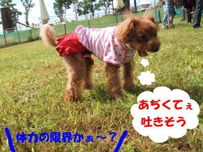0923016_convert_20080925150006.jpg