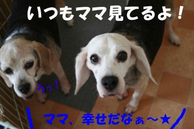 100604_convert_20081006174921.jpg