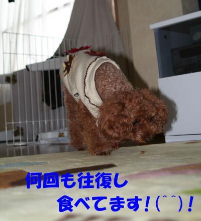 102315_convert_20081024033635.jpg