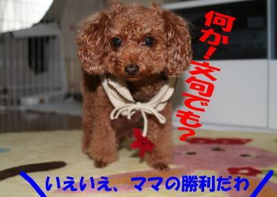 102317_convert_20081024033743.jpg