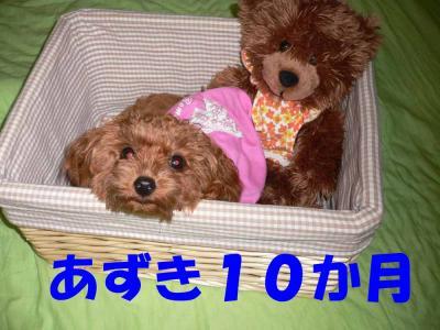 2222_convert_20080912010441.jpg