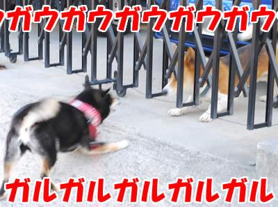 20080313_0014.jpg