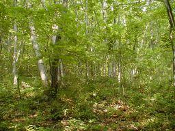 朝の雑木林