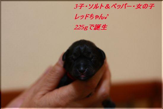 レッドちゃん(スワロの子)